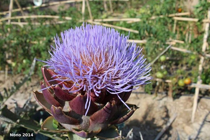 Flora de Galera - Foto: J.A. Blázquez
