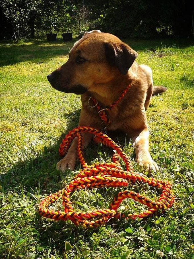 Leine und Halsband orange braun gelb und rot