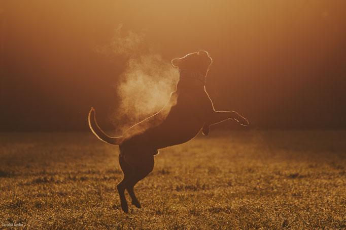Hundefotografie köln | Tierfotografie Köln | (c) die Schnappschützen