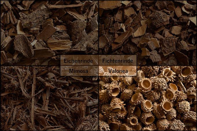 Valonea: Der Valoneabaum besitzt Früchte, deren Zacken einen Gerbstoffgehalt von 30 bis 35 Prozent und ähnliche Gerbeigenschaften wie die Eichenrinde aufweisen.