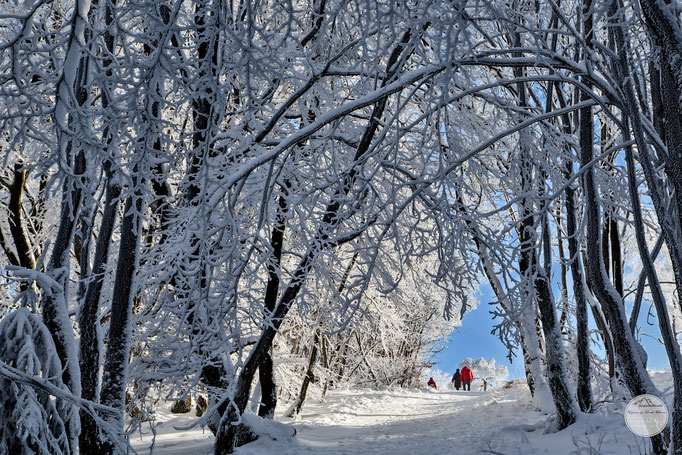 "Bild: Winterberg Umgebung Kahler Asten, ""winter walk"", www.2u-pictureworld.de"