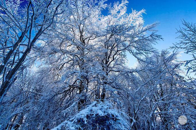 """Bild: Kahler Asten Winterberg, """"snowy treesV3"""", www.2u-pictureworld.de"""