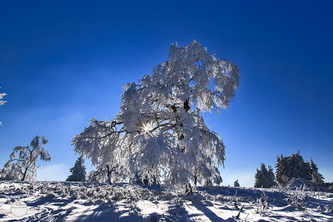 "Bild: Gebiet Kahler Asten in Winterberg, ""eye of the winter tree"", www.2u-pictureworld.de"