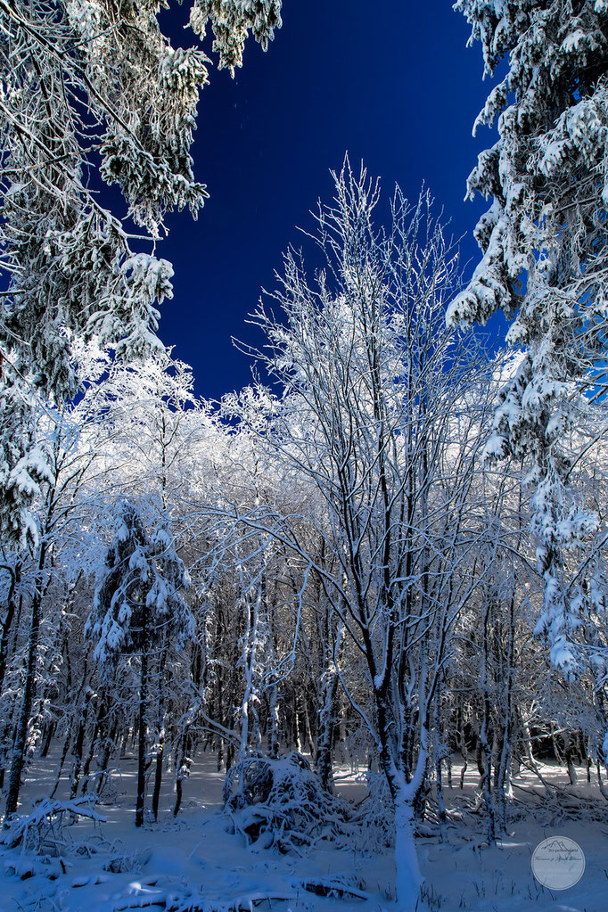 "Bild: Skiparadies Winterberg, ""winter trees"", www.2u-pictureworld.de"