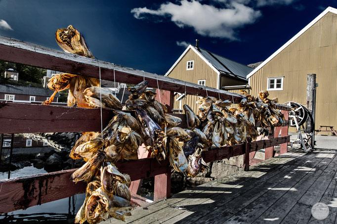 "Bild: Nusfjord stockfish; Flakstadoya Island Lofoten Norway; ""Nusfjord`s dried headsV4""; www.2u-pictureworld.de"