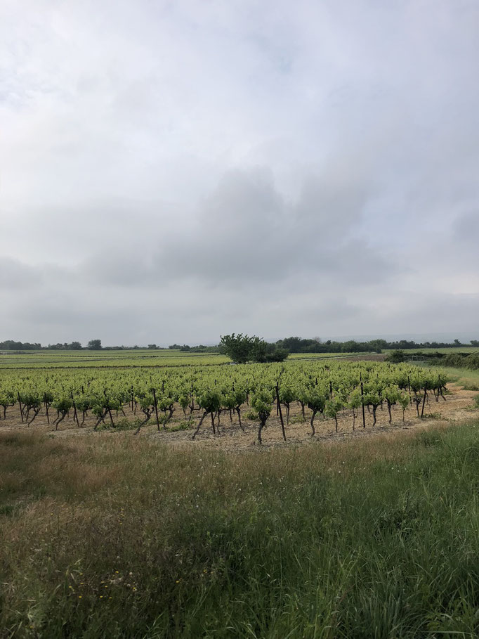 Got almost lost in between wine yards somewhere in Provence, South of France
