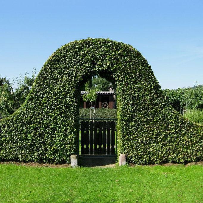 Kleingärten