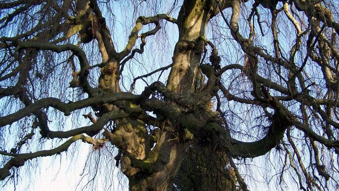 Baum auf dem Friedhof