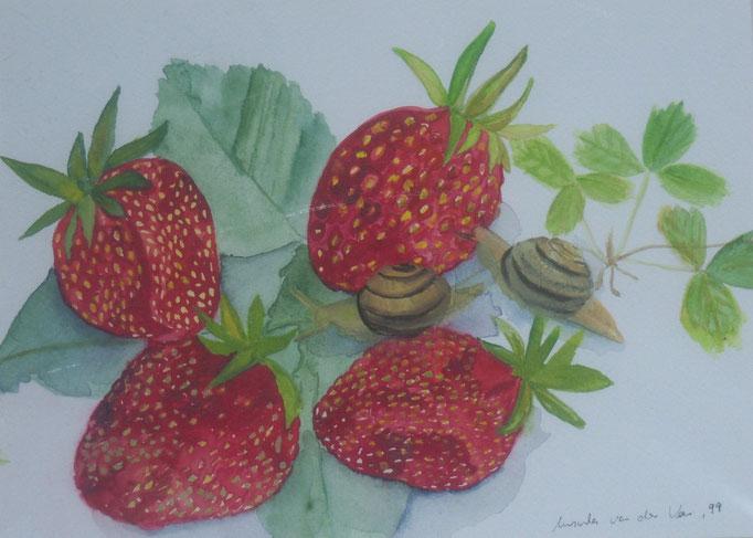 Erdbeeren mit Schnecken, 2004, Aquarell auf Papier, 30 x 25 cm
