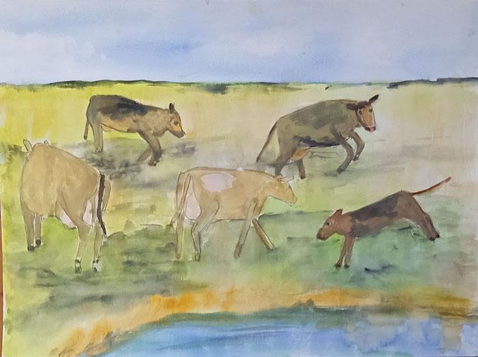 Junge Kühe am Priel, 2020, Aquarell auf Papier, 29,5 X 40 cm