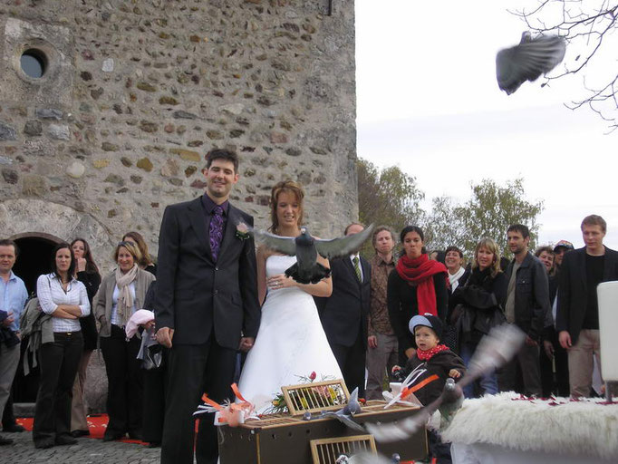 Hochzeitstauben - Hochzeitsbilder