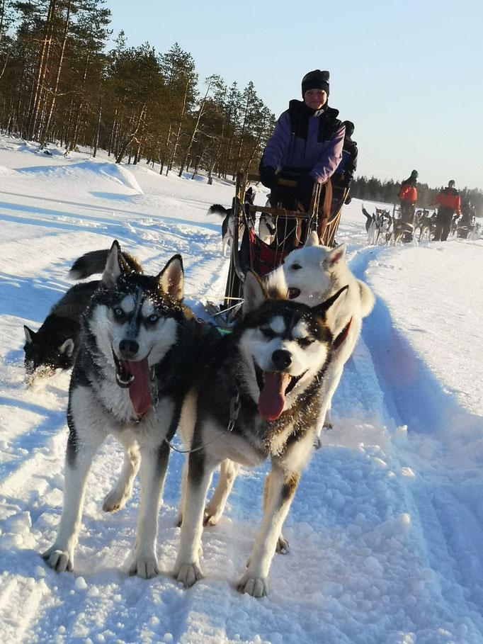 Hundeschlittentour durch Lapplands Weiten