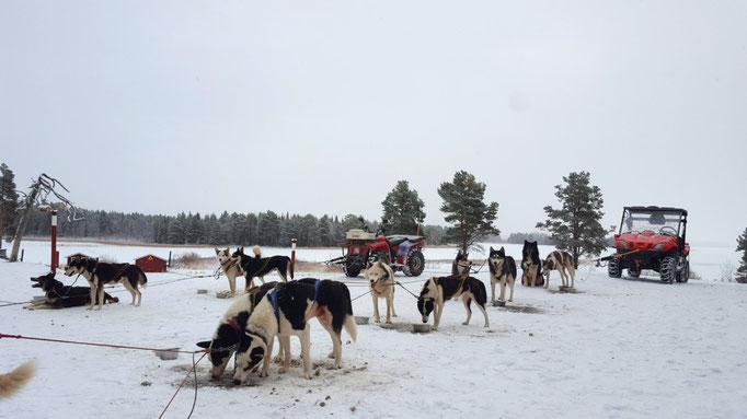 Hundegespanne durch Schwedens schönste Natur