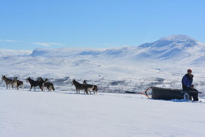 Lappland Huskytouren