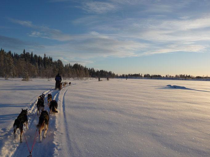 Huskygespanne auf dem zugefrorenem Fluss Juktån
