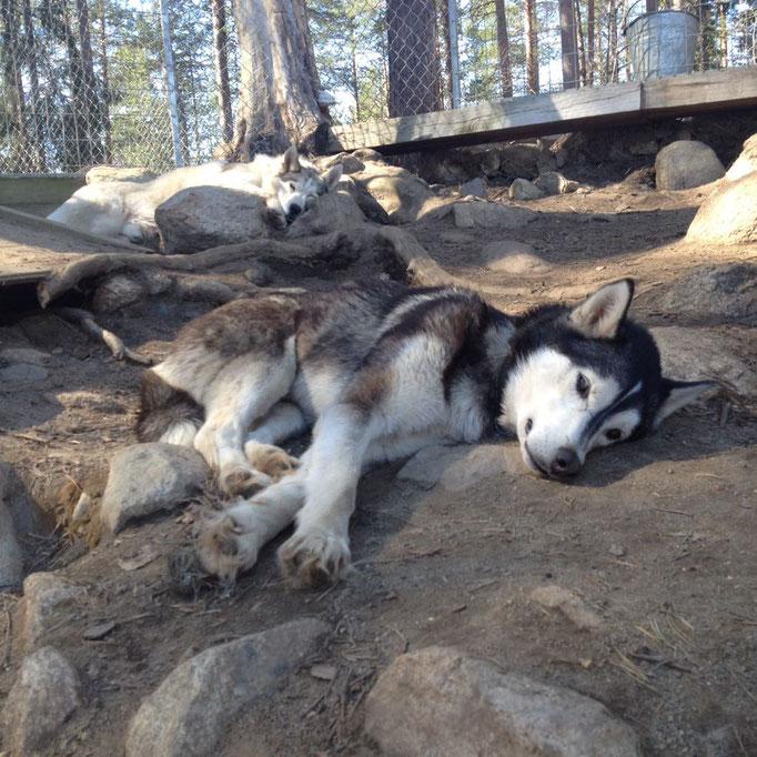 Geniessen muss sein - Lappland Ruhe