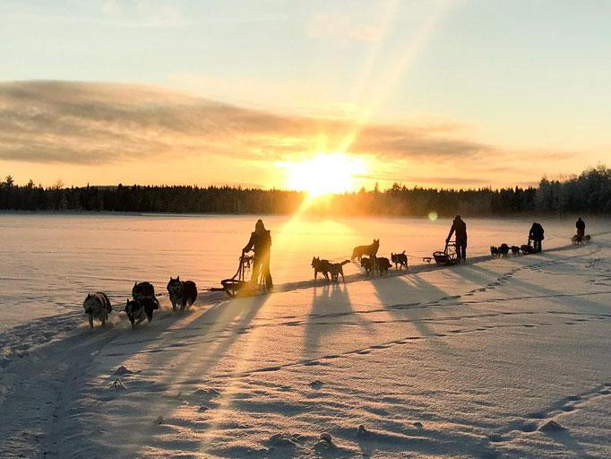 Dezember & Huskytouren im Sonnenuntergang