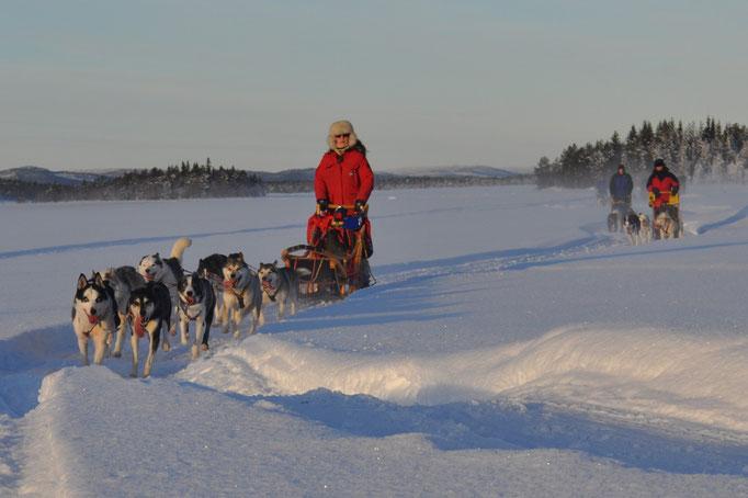Schlittenhundegespanne  in Lappland