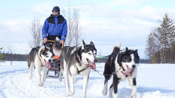 Hundeschlittentouren mit Lapplands Drag
