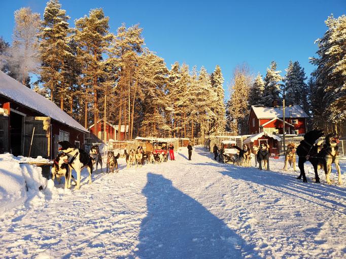 Ein Schwedentraum im Schnee