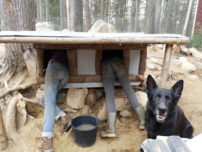 Hundehütten Großputz in Lappland