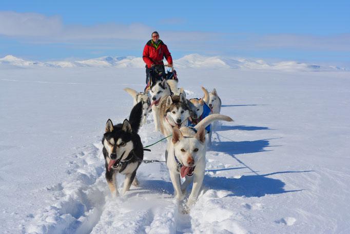 Husky Expedition im schwedischen Hochgebirge