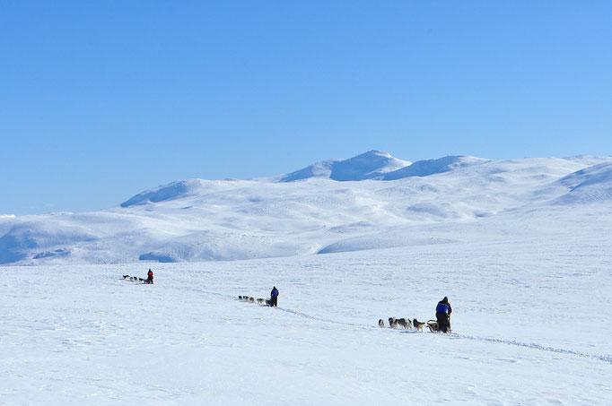 Die unendlichen Weiten Lapplands mit dem Hundeschlitten erfahren