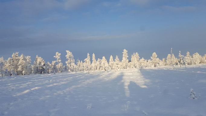 Verschneite Kulisse im Dezember /Schweden pur