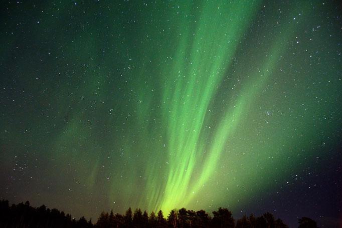 Polarlicht über unserer Huskyfarm in Lappland