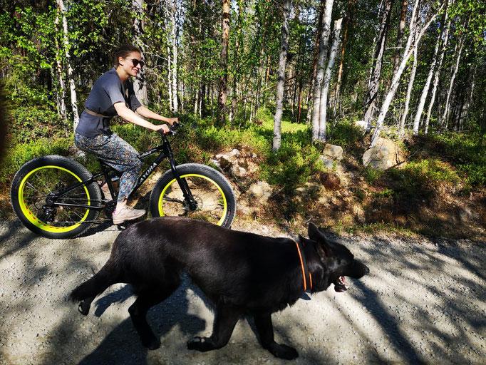 Fahrradfahren/Fatbike mit Hund