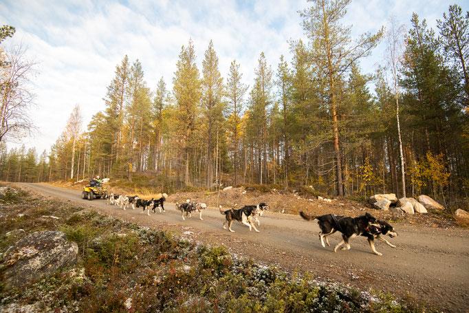 Herbst und Lappland lohnt sich!
