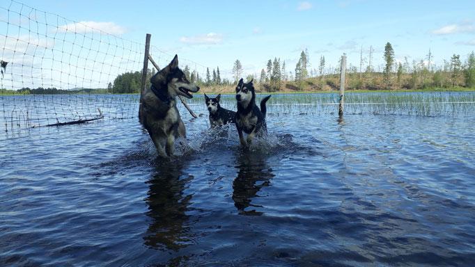 Eingehängtes Flussstück für unsere Schlittenhunde