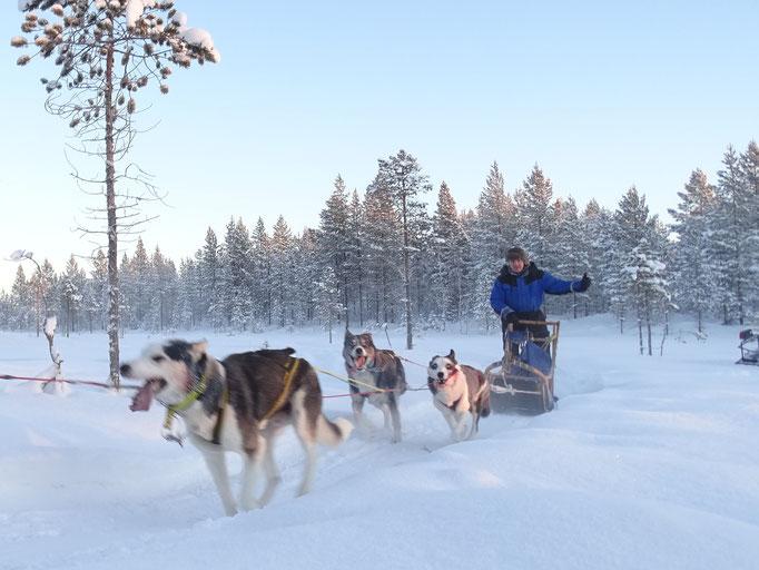 Winterurlaub mit Huskies