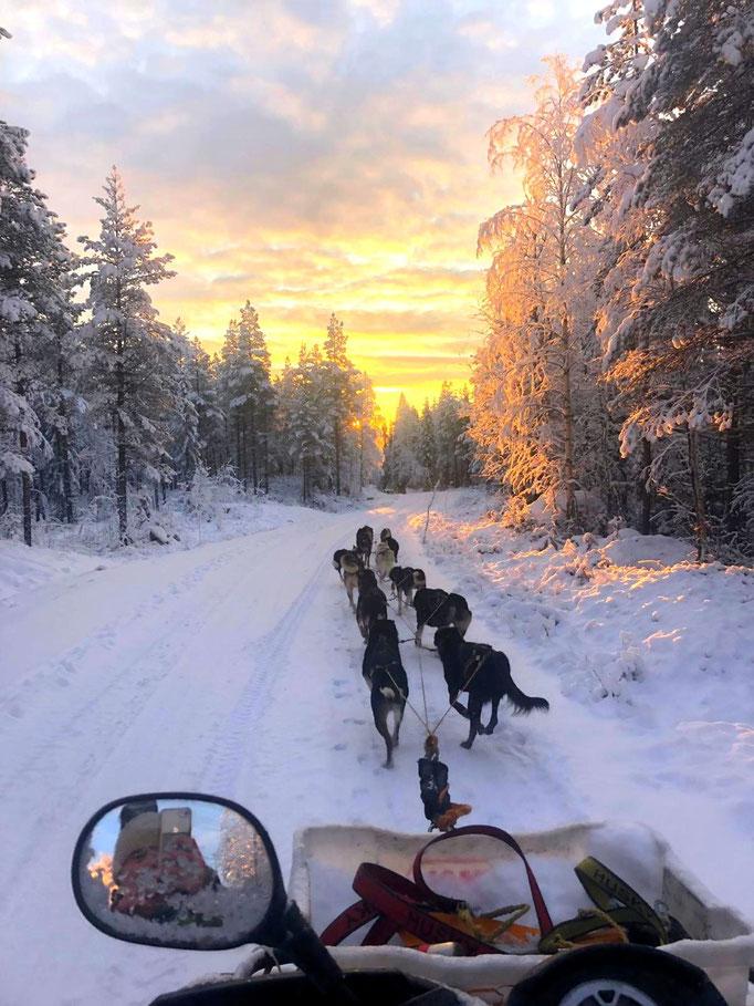 Huskytouren bei Sonnenaufgang