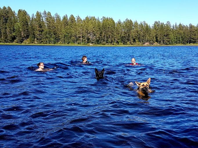 Schwimmen im Fluss mit den Hunden