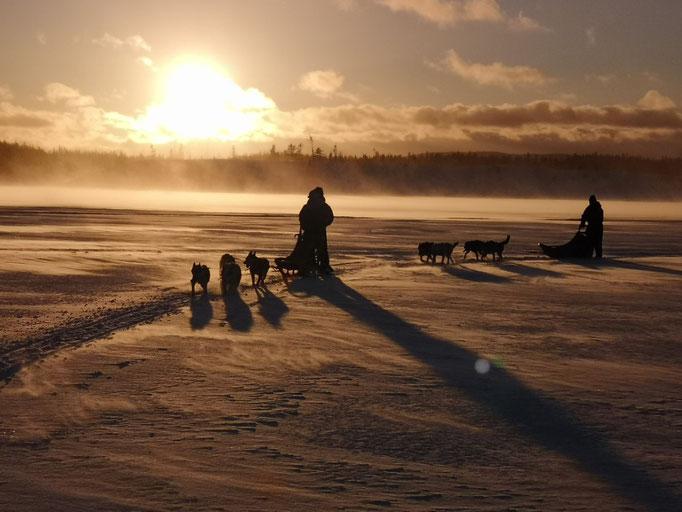 Auf Huskytour im Sonnenuntergang