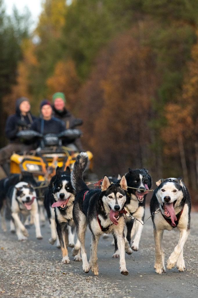 Huskyfarm & Hundeschlittentouren in Lappland