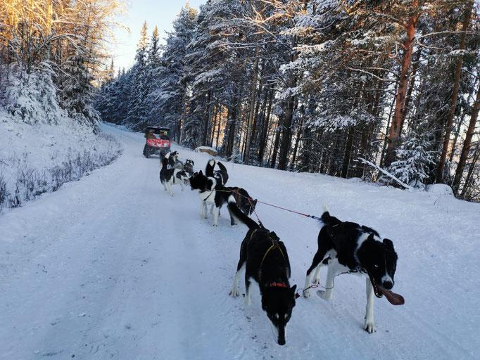Schlittenhundetouren in Schweden/Lappland