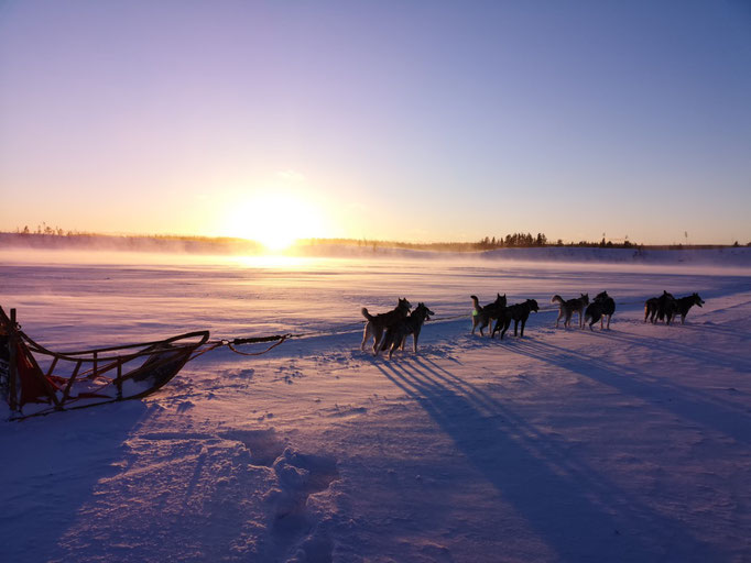 Huskytour im Sonnenuntergang