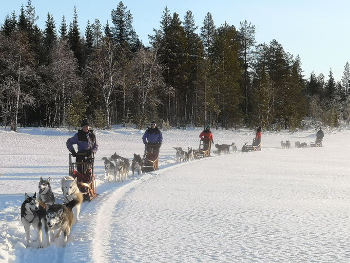 Winter & Urlaub = Huskytouren in Lappland