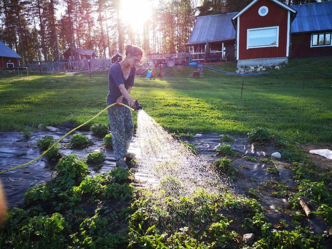 Sommer bedeutet auch Gartenarbeit