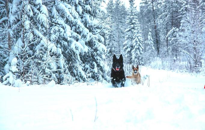Schneespaziergang in Lappland