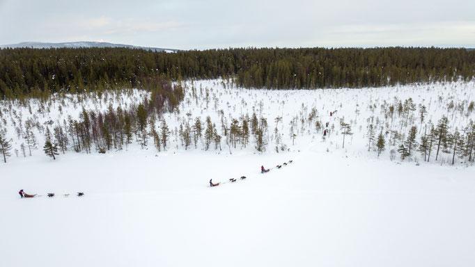 Husky Gespanne ziehen durch Lapplands Weiten