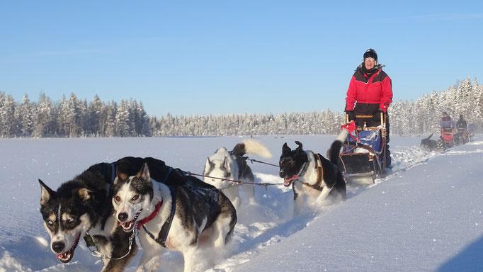 Schlittenhunde fahren durch tief verschneite Weiten