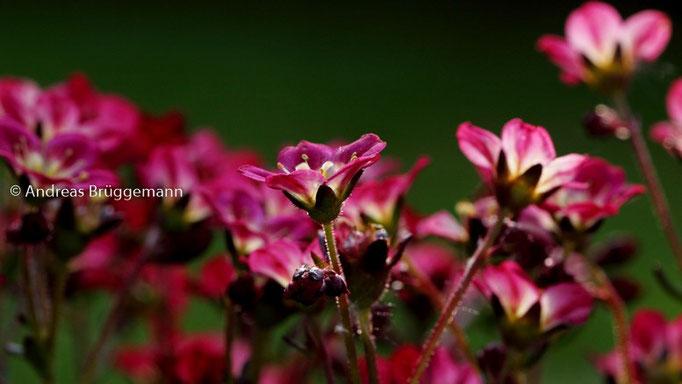 blooming garden_02