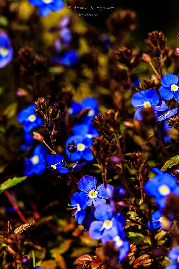 blue spring-17