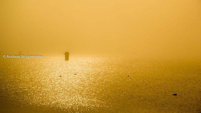 Nebel in Kiel_gold