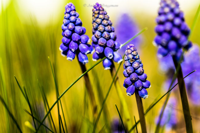 blue spring-1