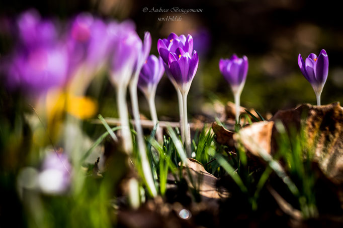 colorful spring-3