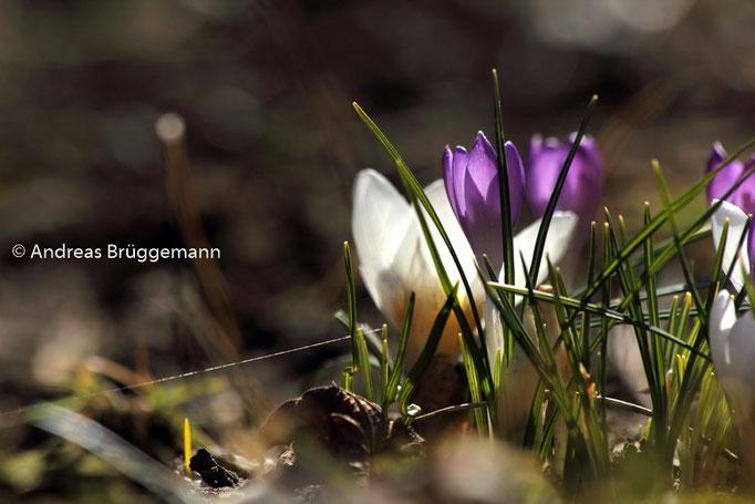 Der Frühling_3